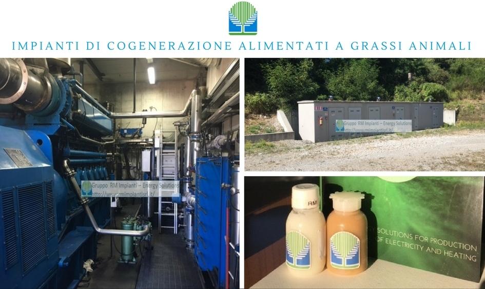 impianti-di-cogenerazione-a-grassi-animali