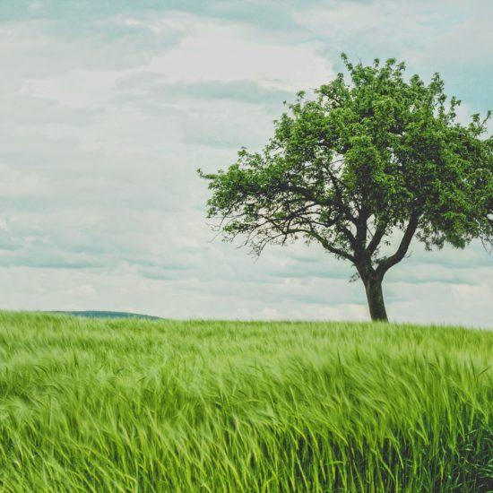 biocarburante da biomassa
