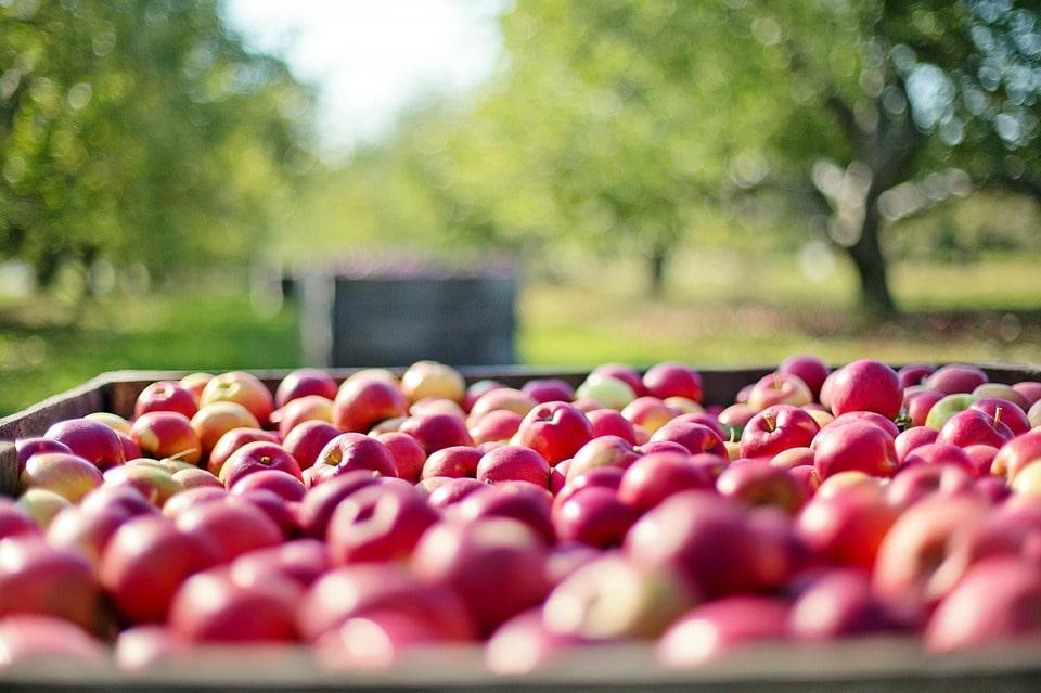 frutta in campagna