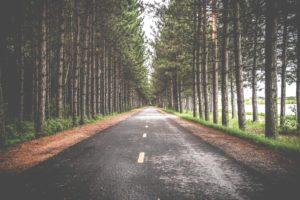 strada tra i boschi